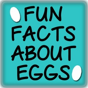 Fun Facts About Eggs from fivelittlechefs.com